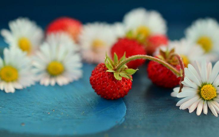 wild-strawberry-and-chamomile-white-flower-wallpaper-1920x1200.jpg (1920×1200)