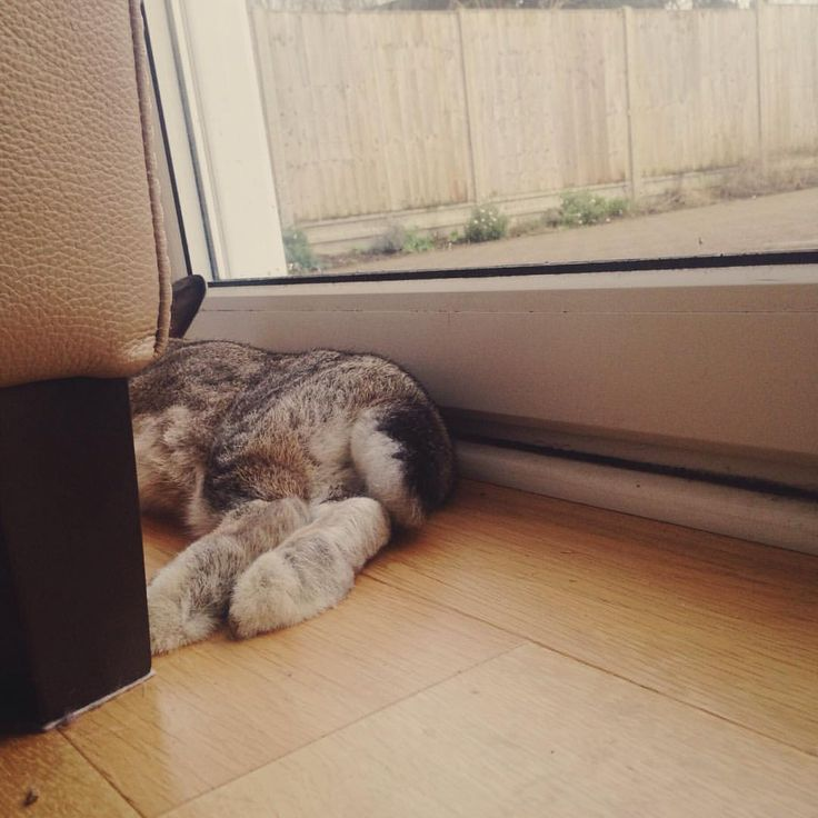 Can't get enough of those fluffy feet ❤️ #bunniesofinstagram #housebunny #bunnychild #furbaby #fluffy #love #vscocam