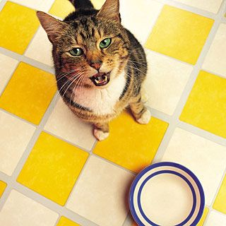 Cat Pawing At Floor Around Food