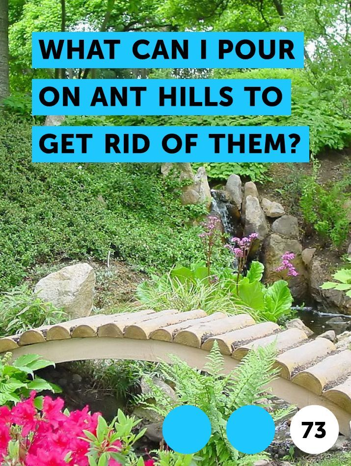 What Can I Pour On Ant Hills To Get Rid Of Them Plants Lilac