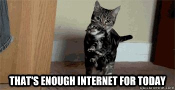 Mama Cat - That's enough internet for today
