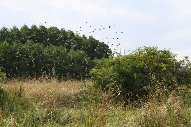 birds, country, nature