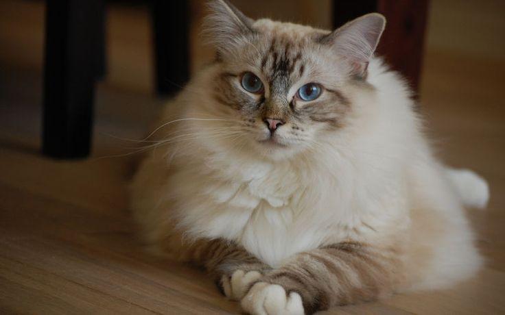 Jak rozpoznać płeć u kota?