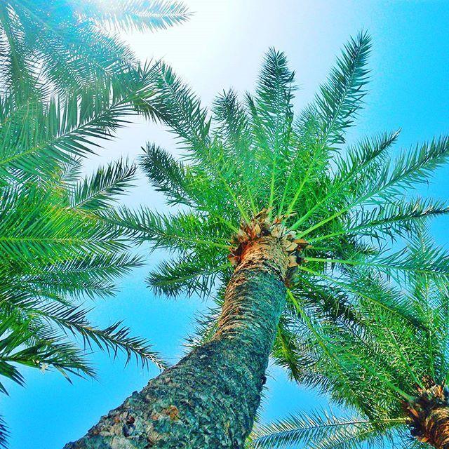 🌴💜 #travelgirl #bestintravel #globetrotter #travel #openmyworld #podróż #luxurytravelblog #iloveit #potd #adorable #adventure #visittunisia #amazing #voyage #nikon #discoverearth #nature #instatravel #natgeo #alanya #fantrip #explore #lifeliveit #awesomeearth #photographer #adorable #palms #leciodkryjswiat #travelphotography #natgeopl