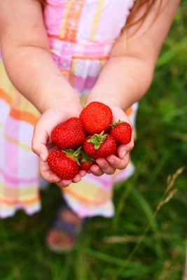 Pick Strawberries Day and Fruit Unit Study #SuliaChat