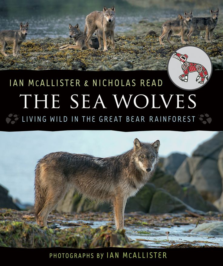 "The Sea Wolves sets out to disprove the notion of ""the Big Bad Wolf,"" especially as it is applied to coastal wolves—a unique strain of wolf that lives in the rainforest along the Pacific coast of Canada. Illustrated with almost one hundred of Ian McAllister's magnificent photographs, The Sea Wolves presents a strong case for the importance of preserving the Great Bear Rainforest for the wolves, the bears and the other unique creatures that live there."