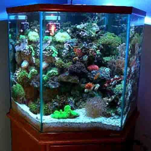 Used Fish Tanks For Sale -          (adsbygoogle = window.adsbygoogle || []).push();    - http://losporcos.com/used-fish-tanks-for-sale/