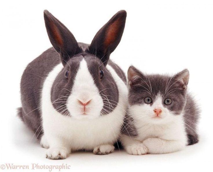 Adorables retratos de improbables parejas de animales con la piel a juego