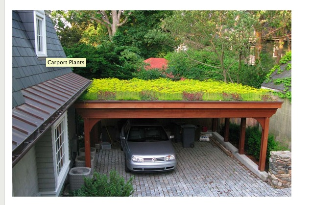 REALLY want a car port with a living roof.