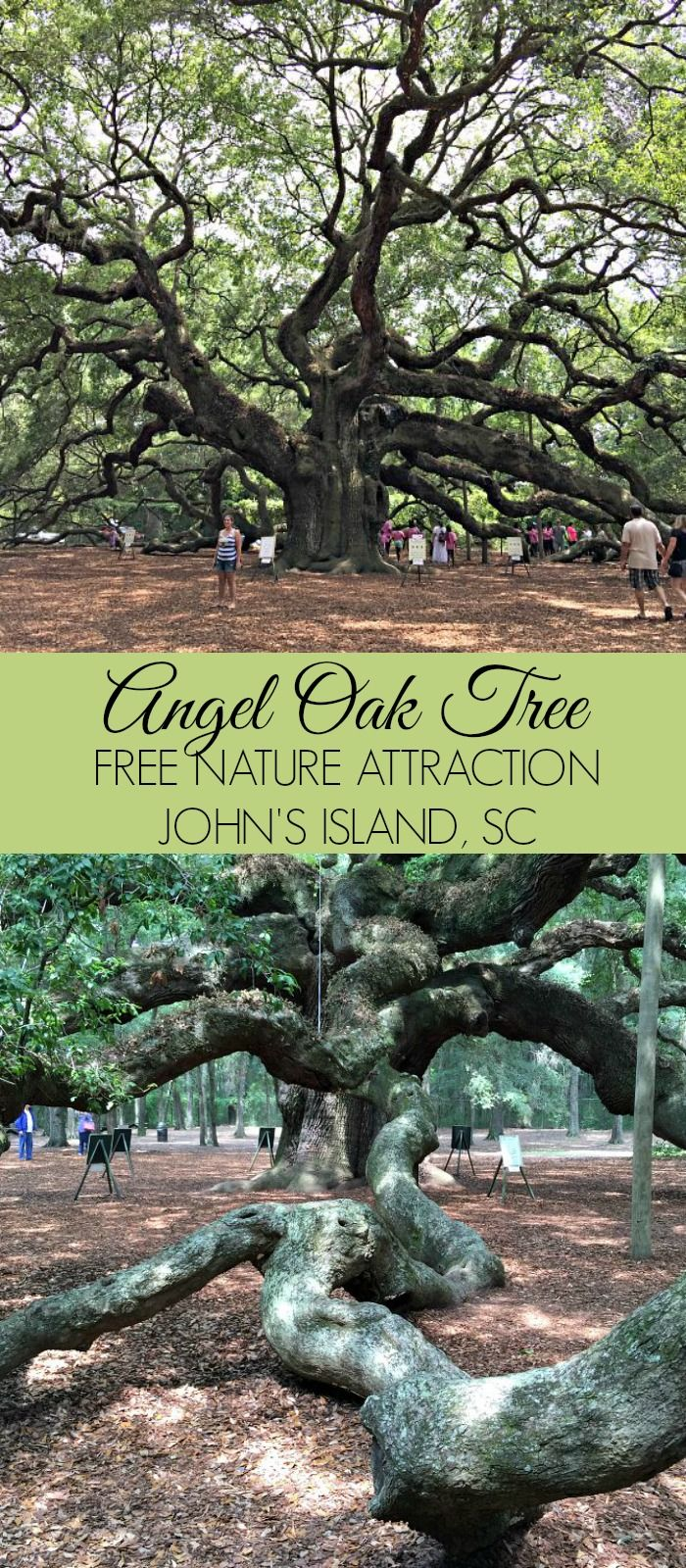 Travel to South Carolina and visit the  free nature attraction on John's Island, SC - The Angel Oak Tree
