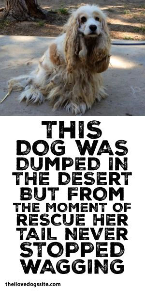 This Dog Was Dumped In The Desert But From The Moment Of Rescue, Her Tail Never Stopped Wagging!