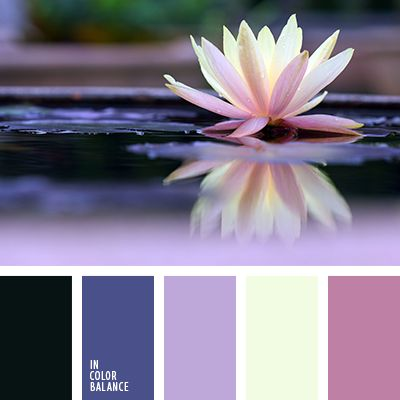amarillo y rosado, azul oscuro y negro, color casi negro, colores lila y violeta, combinación de colores contrastante, elección del color, proyecto para diseñar una casa, rosado y amarillo, selección del color para el hogar, tonos violetas, violeta y azul oscuro.
