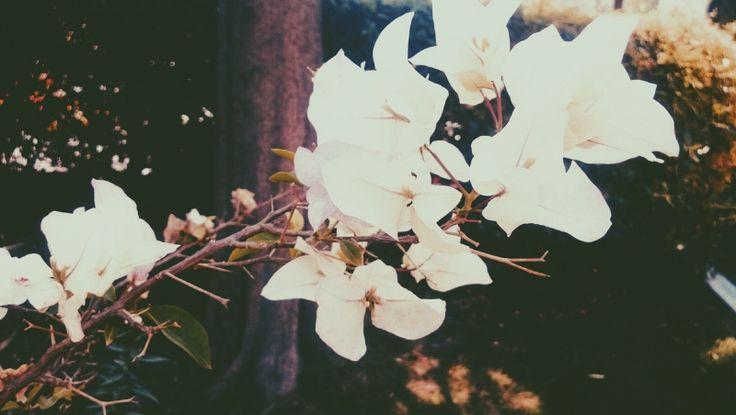 #vsco #vscocam #flowers