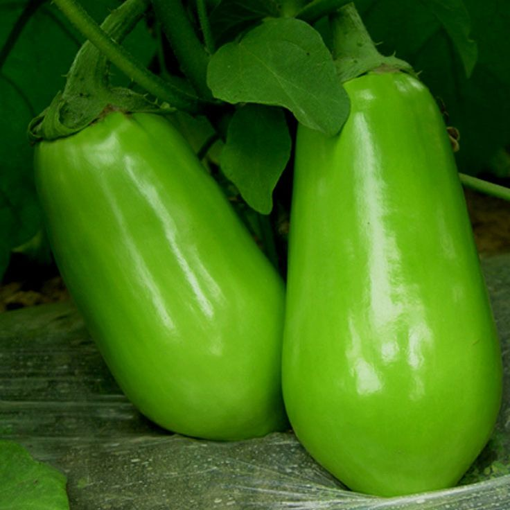 Direct Selling New Summer Blooming Plants Virgo Emerald Eggplant Seeds Family Potted Planting 50 Garden Essential 100Seeds