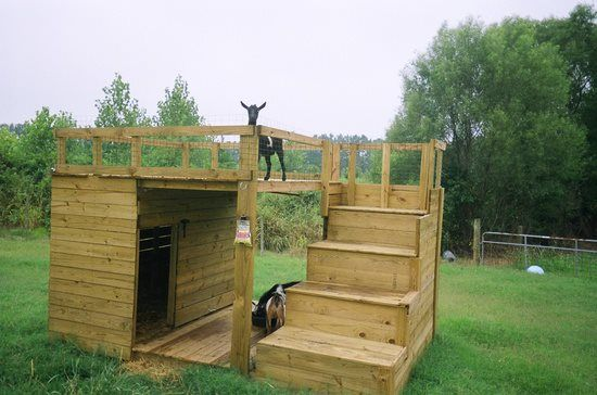 Now I don't have any goats but if I did I would definitely want to build them one of these goat houses with play yards! Love it! i think it would make a great dog house or even a great playhouse for small kids