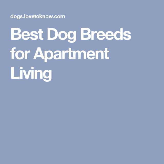 Best Dog For Apartment: Best Dog Breeds For Apartment Living