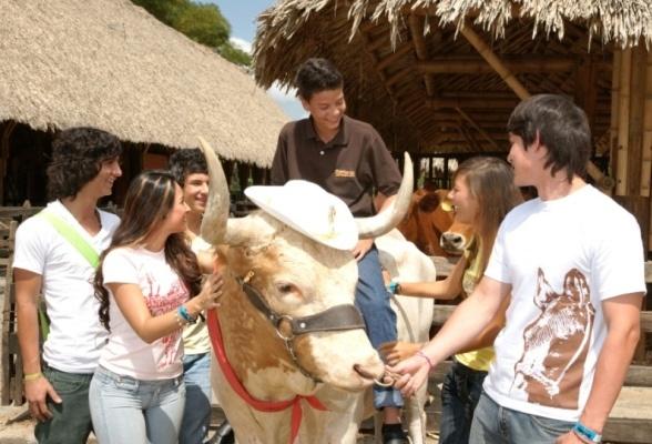 Panaca - Eje Cafetero | Turismo Eje Cafetero - Muestra y exhibición Ganadera