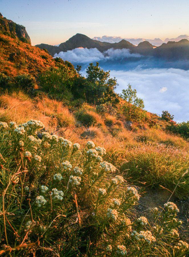 5 Tempat Terbaik Untuk Melihat Bunga Edelweiss Di Indonesia Wira Nurmansyah Pemandangan Yang Indah Lanskap Pemandangan