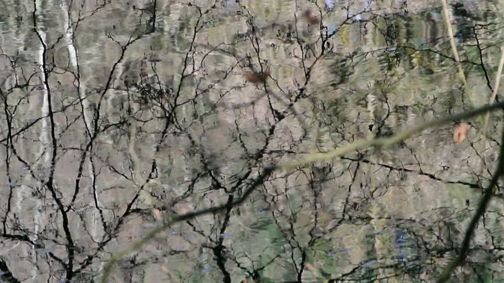 Water Surface With Tree Mirroring And Movement Stock Footage Video ...
