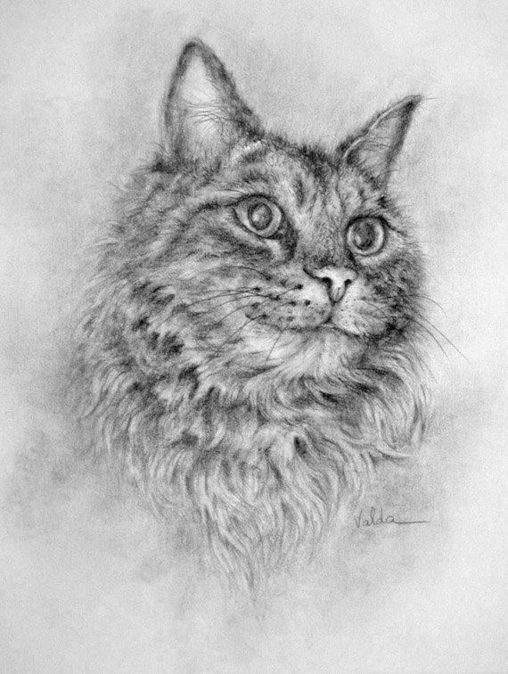 Cat Named Fluffy Print Of Pencil Drawing Cat Print