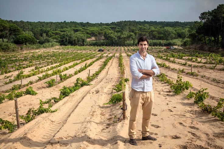 Colares, Where the Vineyards Snake Through the Sand - via The New York Times 03-08-2017 | The savory, distinctive Portuguese wines come from unusual vineyards along the Atlantic coast, continental Europe's westernmost growing region.