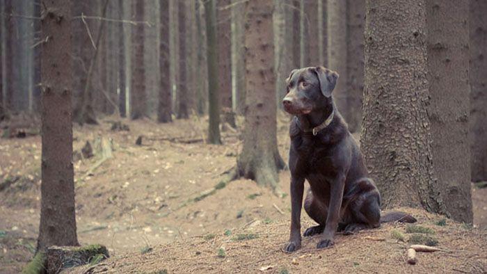 jai-perdu-mon-chien-que-faire-pour-avoir-une-chance-de-le-retrouver