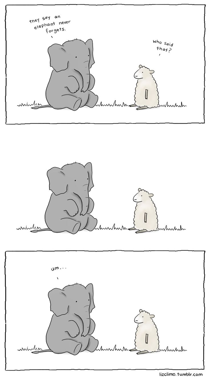forgetful elephant//