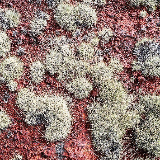 Pilbara spinifex  #gushagoeswalkabout #pilbara #exploreaustralia #canonaustralia #beautifuldestinations