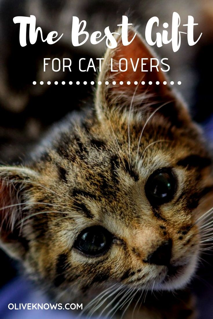 The Best Gifts For Cat Lovers Cat Gifts Cat Lover Gifts Cat Lovers