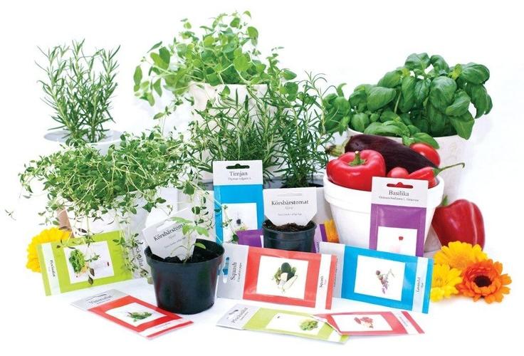 Fina och trevliga fröblandningar från Minda Garden för sådd i rabatt, pallkrage, odlingsbänk eller kruka i 3 kategorier: örtagården, ögonfröjd och köksträdgården. Alla sorter är ätbara och på var och en av påsarna hittar du odlingstips och recept. Toppen av varje påse går dessutom bra att använda som markeringssticka för din odling.   http://www.smartasaker.se/froblandningar-med-tips-recept.html