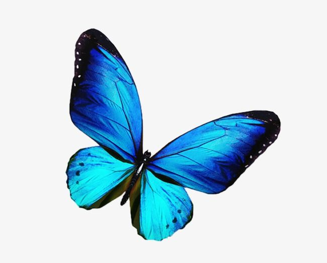 Butterfly Butterfly Clipart Blue Butterfly Png Transparent Clipart Image And Psd File For Free Download Blue Butterfly Purple Butterfly Tattoo Butterfly Clip Art
