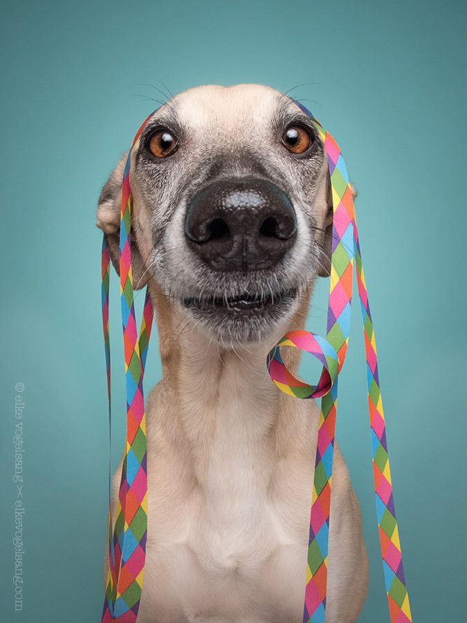 Preparing for the celebrations by Elke Vogelsang on 500px