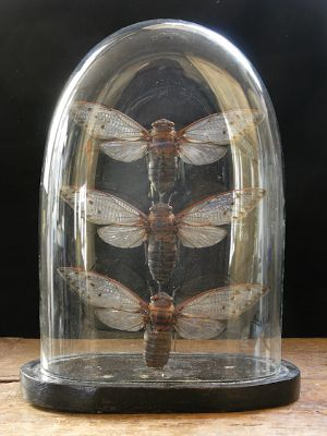 Insectes sous cloche --> naturalia  Ecriture automatique : C'est l'histoire d'une abeille mouche dans un parc qui s'envole dans le lointain. Cloche et débarras, paille et courbes, elle aile entra s'assemble dans une pièce trois étroite. Son amie le crocodile course après elle et sans but  contre un meuble. Ouille ! ça fait mal fermé.