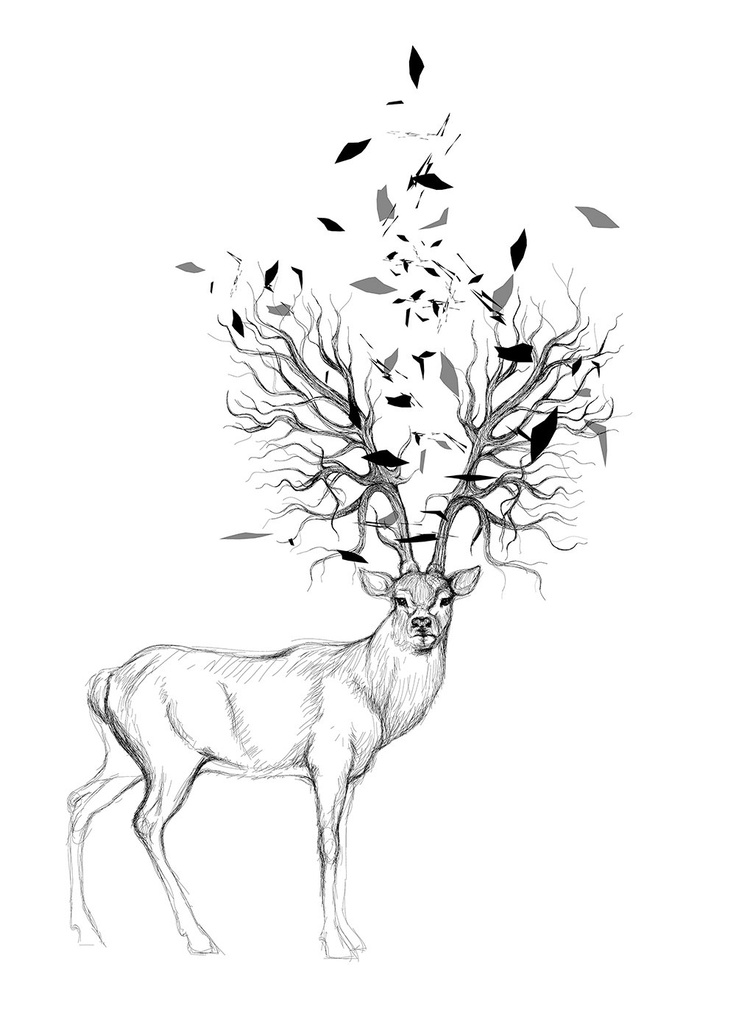 The 31 best images about deer on pinterest time lapse for Best tree drawing
