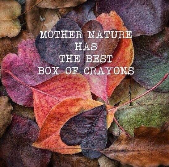 Mother Nature has the best box of crayons #quote #autumn #nature