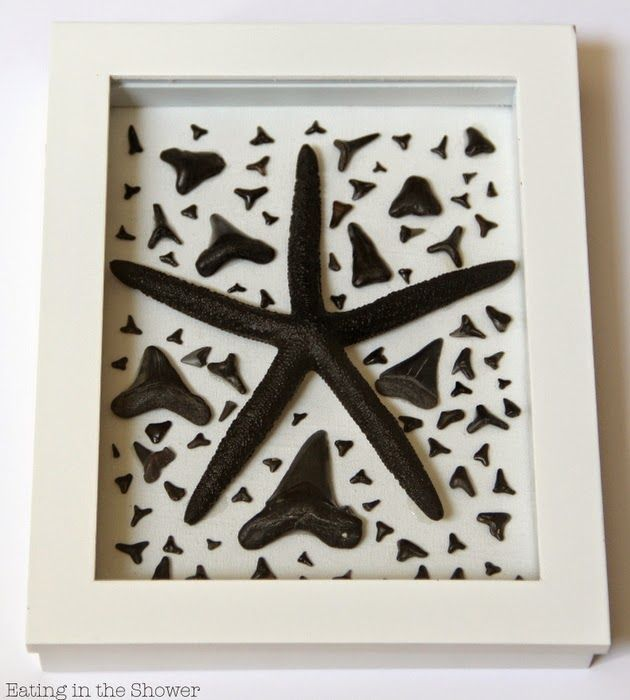 Shark Tooth Shadowbox