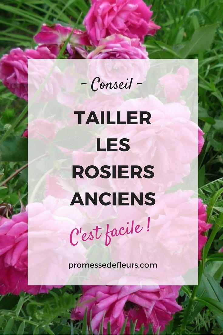 Comment tailler les rosiers anciens ? C'est facile et indispensable pour obtenir une belle floraison. #rose #rosier #ancien #taille