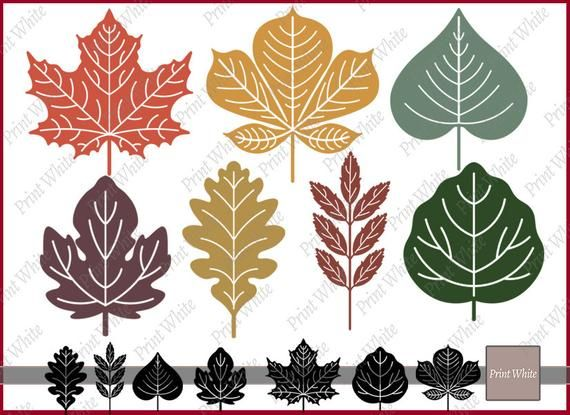 Leaf Svg Fall Leaves Svg Fall Svg Leaves Clipart Maple Leaf Etsy Tribal Svg Leaf Clipart Leaf Silhouette