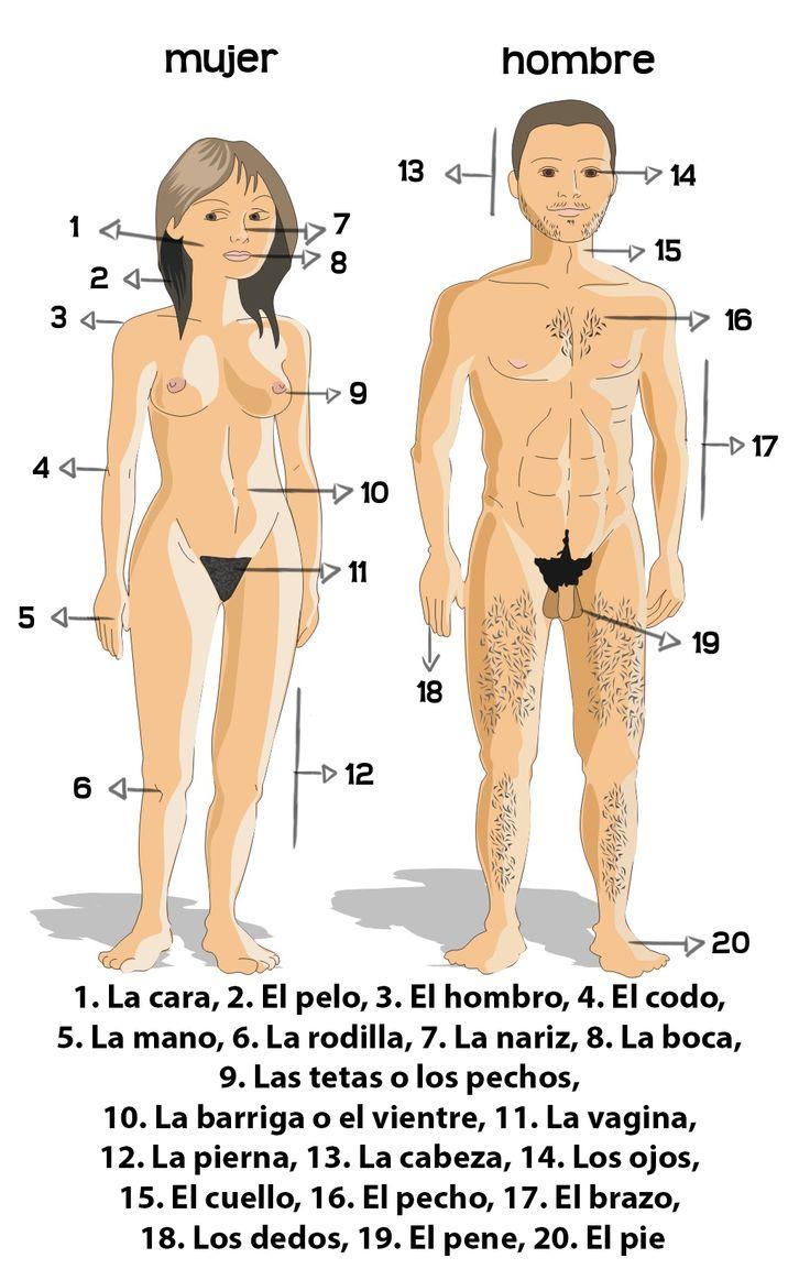 1. La cara, 2. El pelo, 3. El hombro, 4. El codo, 5. La mano, 6. La rodilla, 7. La nariz, 8. La boca, 9. Las tetas o los pechos, 10. La barriga o el vientre, 11. La vagina, 12. La pierna, 13. La cabeza, 14. Los ojos, 15. El cuello, 16. El pecho, 17. El brazo, 18. Los dedos, 19. El pene, 20. El pie