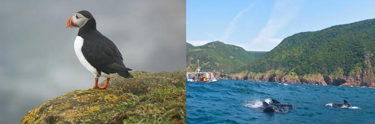 Puffin – Bird Island's, Cape Breton          Whale Watching – Pleasant Bay, Cape Breton