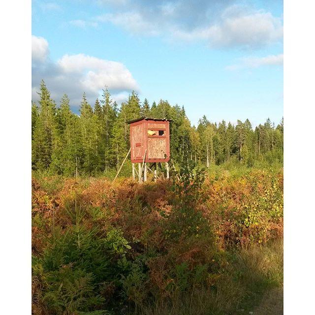 【jontiyanen】さんのInstagramをピンしています。 《Jakttorn i de vida småländska skogarna.  When walking through the majestic forests of Sweden, you can sometimes see small wooden towers like this. But what actually are these things!? Simply speaking, these towers are used by hunters.  Cuando se camina por los bosques majestuosos de Suecia, a veces se puede encontrar torres pequeños de madera como esto. ¡¿Pero qué realmente son estos!? Fácilmente hablando, estos son utilizados por cazadores.  Когда гуляешь…