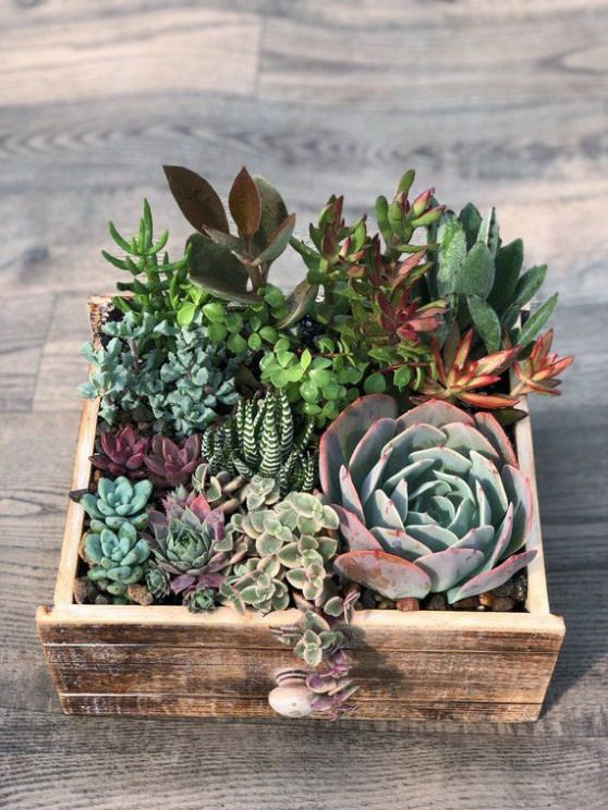 This Wooden Drawer Planter Is A Perfect Touch To Add To Any Desk