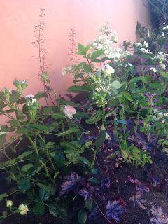 Trädgårdsspan: Nygrävd del av rabatten med växter planterade igår...