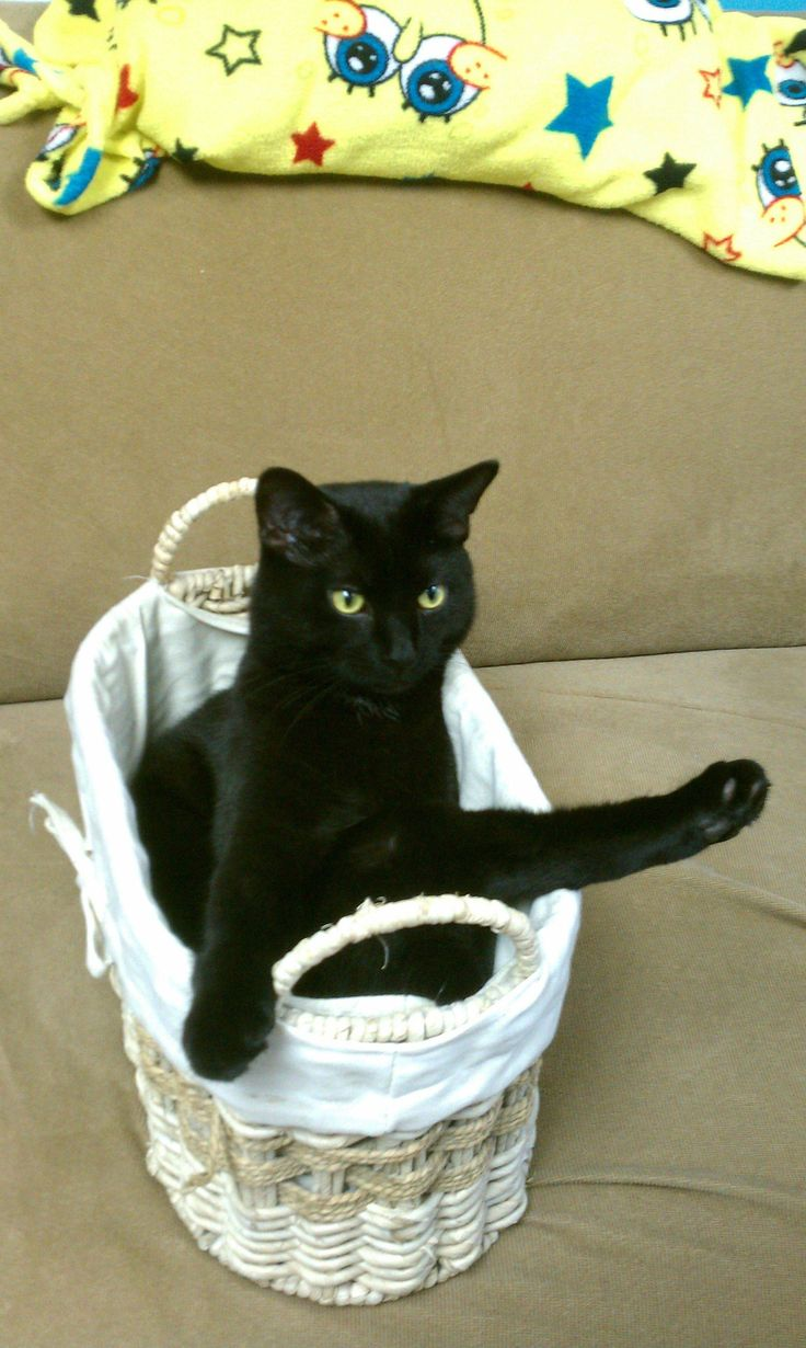 Max looking sexy in his basket. cute cat