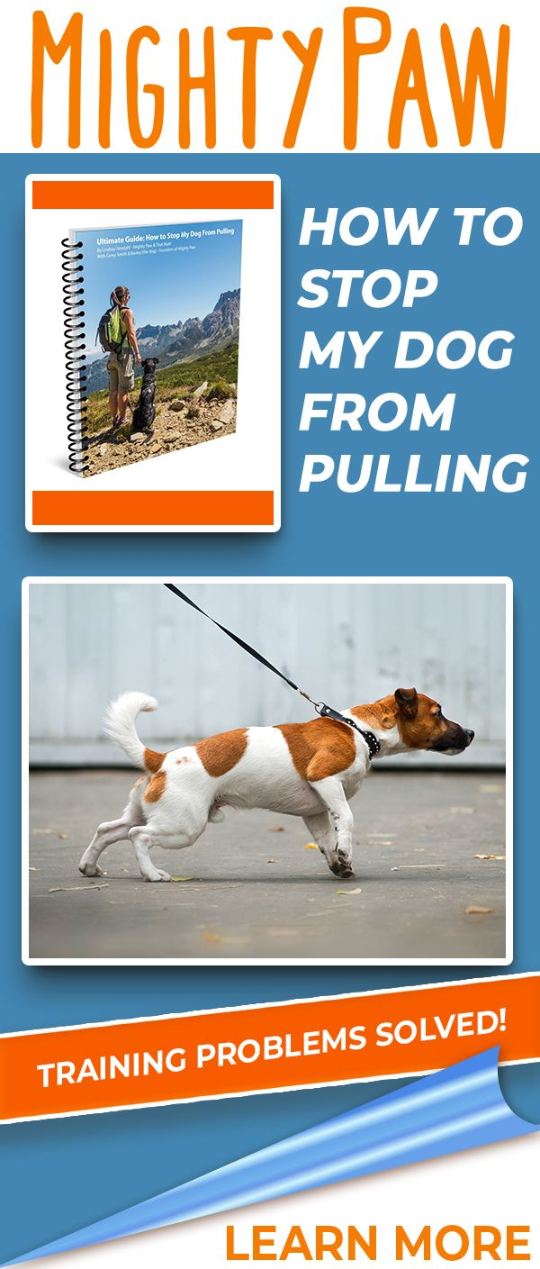 Ebook Ultimate Guide How To Stop My Dog From Pulling Dog