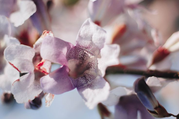 CELEBRATING SPRING WITH CANON 50 mm f/1.8 – Parts of the Sun
