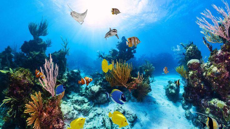 Animated Aquarium Wallpaper Download Trial Aquarium 360 Degree 3d Live Wallpaper Free For