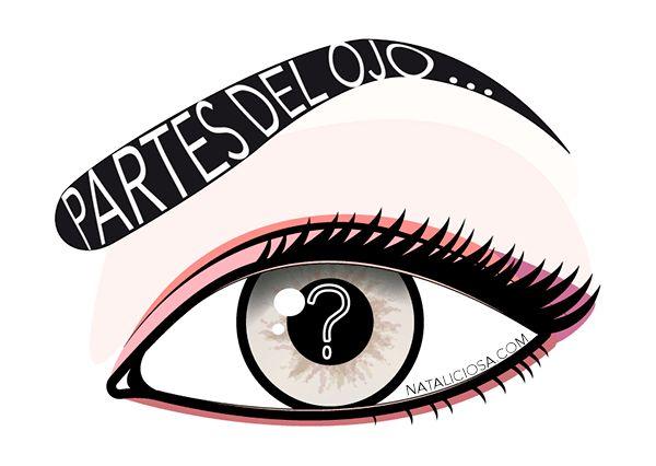 Partes del ojo para aprender a maquillarse mejor - No te pierdas este paso a paso para maquillarte como nunca! Mejorarás un montón!