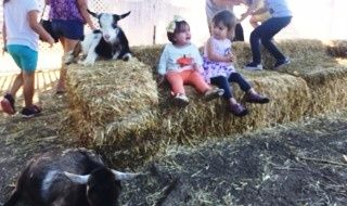 BEWARE OF GOATS! - Oct. 17, 2016 -  Did I have a weekend.  So as you know I was going to the pumpkin farm with my friend Leilah.  And guess what?  We went and had a fabulous and scary time.  Did I say scary?  Oh yes I did.  It is just a good thing  Leilah is older and smarter than me and had been ...