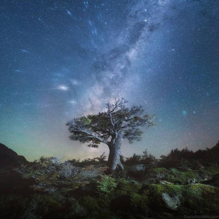 Под Фицроем #Патагония мы жили в палатках в нашем лагере (как говорится отель тысячи звёзд с видом и шаговой доступностью к коммуникациям то есть к ручью). Компания собралась у нас активная посему снимали почти 25 часов в сутки а особенно полюбили мы бродить по болотцам и лесам по ночам. Ведь именно ночью #Фицрой выглядит как невероятный небесный замок в обрамлении звёзд Луны и осенней листвы. В одну из первых ночей сильно подморозило и мы переминаясь с ноги на ногу в патагонском лесу…